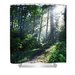 Sunlight Through Trees, Ecola State Shower Curtain by Natural Selection Craig Tuttle