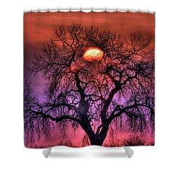 Sunrise Through The Foggy Tree Shower Curtain by Scott Mahon