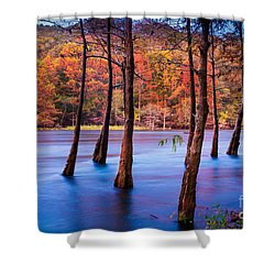 Sunset Cypresses Shower Curtain by Inge Johnsson