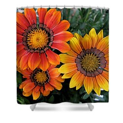 Surprise Shower Curtain by Carol Sweetwood