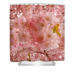Sweet Pink- Holmdel Park Shower Curtain by Angie Tirado