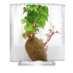 Sweet Potato Shower Curtain by Gaspar Avila