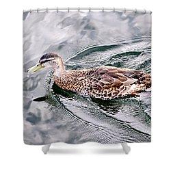 Swimming Duck Shower Curtain by Elena Elisseeva