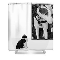 Sworn Enemies - Gently Cross Your Eyes And Focus On The Middle Image Shower Curtain by Brian Wallace