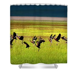 Take Off Shower Curtain by Leland D Howard