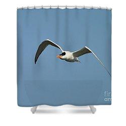 Tern Flight Shower Curtain by Al Powell Photography USA