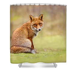That Look - Red Fox Male Shower Curtain by Roeselien Raimond