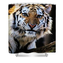 That Tiger Look Shower Curtain by Karol Livote