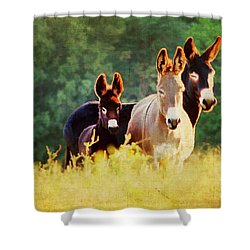 The A Family Shower Curtain by Darren Fisher