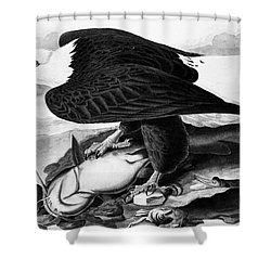 The Bald Eagle Shower Curtain by Granger