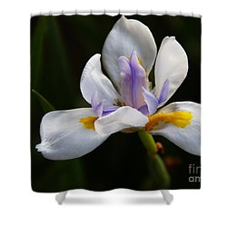 The Beckoning Shower Curtain by Linda Knorr Shafer