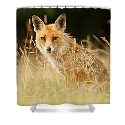 The Catcher In The Grass - Wild Red Fox Shower Curtain by Roeselien Raimond