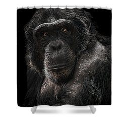 The Contender Shower Curtain by Paul Neville