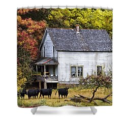 The Cows Came Home Shower Curtain by Debra and Dave Vanderlaan