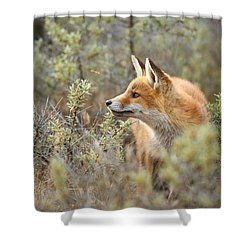 The Fox And Its Prey Shower Curtain by Roeselien Raimond