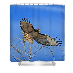 The Hunt Shower Curtain by Donna Kennedy