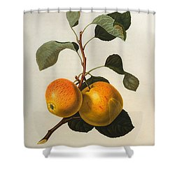 The Kerry Pippin Shower Curtain by William Hooker