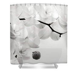 The Last Orchid Shower Curtain by Wim Lanclus