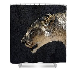 The Lioness Shower Curtain by Ernie Echols