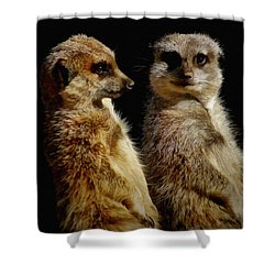 The Meerkats Shower Curtain by Ernie Echols