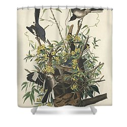 The Mockingbird Shower Curtain by John James Audubon