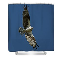 The Osprey Shower Curtain by Ernie Echols