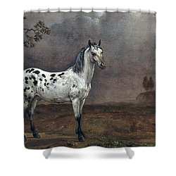 The Piebald Horse Shower Curtain by Paulus Potter
