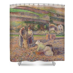 The Potato Harvest Shower Curtain by Camille Pissarro