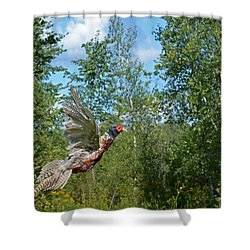 The Ring-necked Pheasant In Take-off Flight Shower Curtain by Asbed Iskedjian