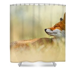 The Sleeping Beauty - Wild Red Fox Shower Curtain by Roeselien Raimond