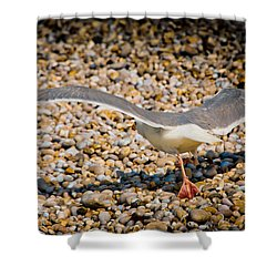 The Takeoff Shower Curtain by Loriental Photography