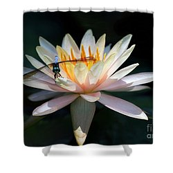 The Water Lily And The Dragonfly Shower Curtain by Sabrina L Ryan