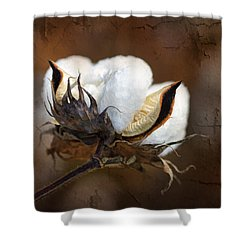 Them Cotton Bolls Shower Curtain by Kathy Clark