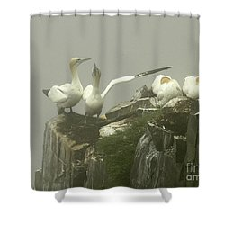 They Went That Away Shower Curtain by Teresa A and Preston S Cole Photography