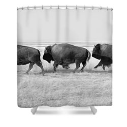 Three Buffalo In Black And White Shower Curtain by Todd Klassy