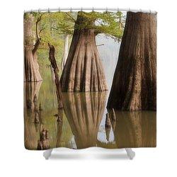 Three Kings Shower Curtain by Jonas Wingfield