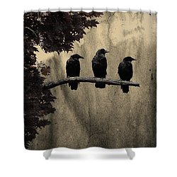 Three Ravens Shower Curtain by Gothicrow Images