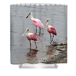 Three Roseate Spoonbills Square Shower Curtain by Carol Groenen