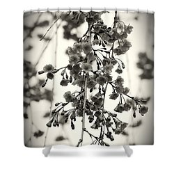 Tiny Buds And Blooms Shower Curtain by Angie Tirado