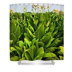 Tobacco Shower Curtain by Kristin Elmquist