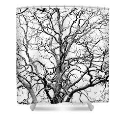 Tree Branches Shower Curtain by Gaspar Avila