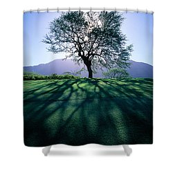 Tree On Grassy Knoll Shower Curtain by Carl Shaneff - Printscapes