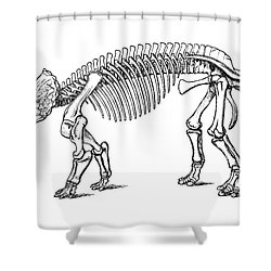 Triceratops Prorsus Shower Curtain by Science Source