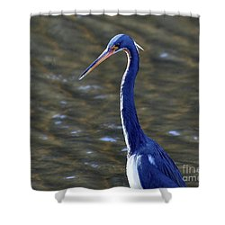 Tricolored Heron Pose Shower Curtain by Al Powell Photography USA