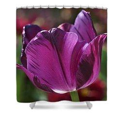 Triumph Tulip Negrita Shower Curtain by Rona Black