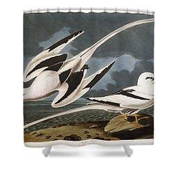 Tropic Bird Shower Curtain by John James Audubon