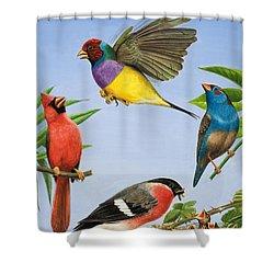 Tropical Birds Shower Curtain by RB Davis