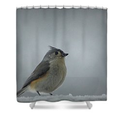 Tufted Titmouse In The Snow Shower Curtain by Cricket Hackmann