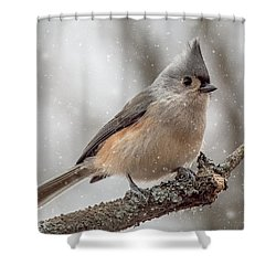 Tufted Titmouse In The Snow Shower Curtain by Pat Eisenberger