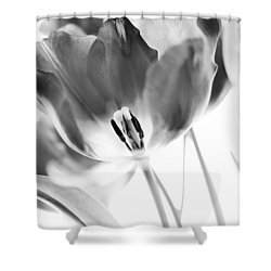 Tulips Shower Curtain by Silke Magino